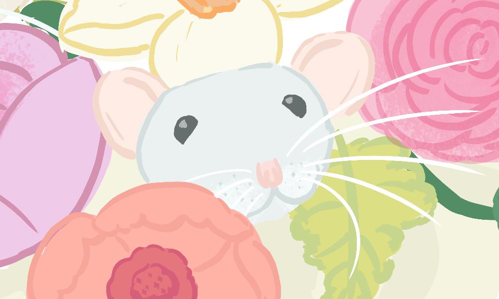 Detail: grey dumbo rat