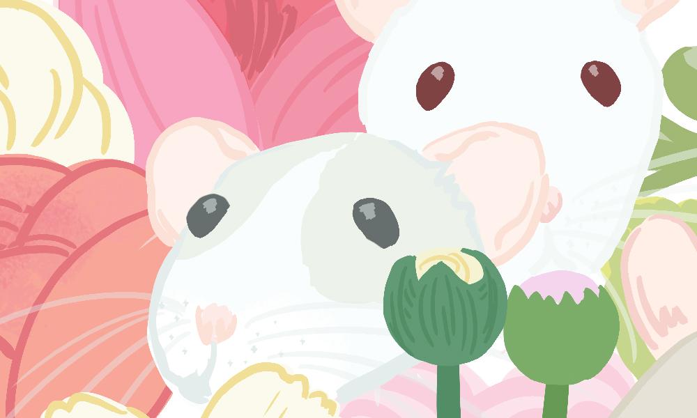 Detail: Masked dumbo rat